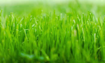 Lawn Service in Cleveland OH Lawn Care in Cleveland OH Lawn Mowing in Cleveland OH Lawn Professionals in Cleveland OH