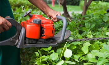 Shrub Removal in Cleveland OH Shrub Removal Services in Cleveland OH Shrub Care in Cleveland OH Landscaping in Cleveland OH
