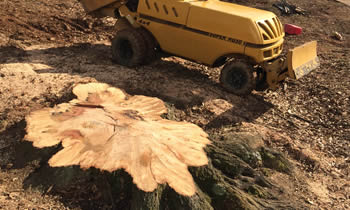 Stump Removal in Cleveland OH Stump Removal Services in Cleveland OH Stump Removal Professionals Cleveland OH Tree Services in Cleveland OH