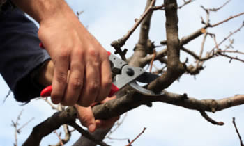 Tree Pruning in Cleveland OH Tree Pruning Services in Cleveland OH Quality Tree Pruning in Cleveland OH