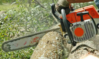 Tree Removal in Cleveland OH Tree Removal Quotes in Cleveland OH Tree Removal Estimates in Cleveland OH Tree Removal Services in Cleveland OH Tree Removal Professionals in Cleveland OH Tree Services in Cleveland OH