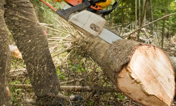 Tree Service in Cleveland OH Tree Service Estimates in Cleveland OH Tree Service Quotes in Cleveland OH Tree Service Professionals in Cleveland OH