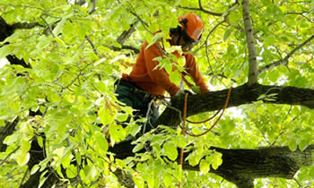 Tree Trimming in Cleveland OH Tree Trimming Services in Cleveland OH Tree Trimming Professionals in Cleveland OH Tree Services in Cleveland OH Tree Trimming Estimates in Cleveland OH Tree Trimming Quotes in Cleveland OH