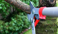 Tree Pruning Services in Cleveland OH