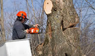 Tree Removal in Cleveland OH